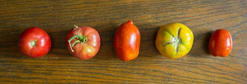 tomates 20150710