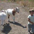 mon fermier et ses chèvres