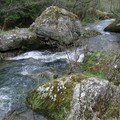 2008 04 20 La rivière de Roumezoux