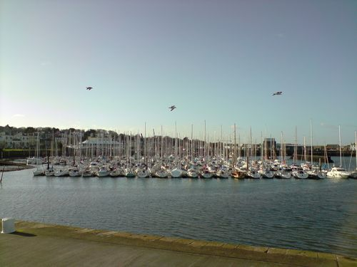 Howth's harbour and its occupants : seagulls !!!