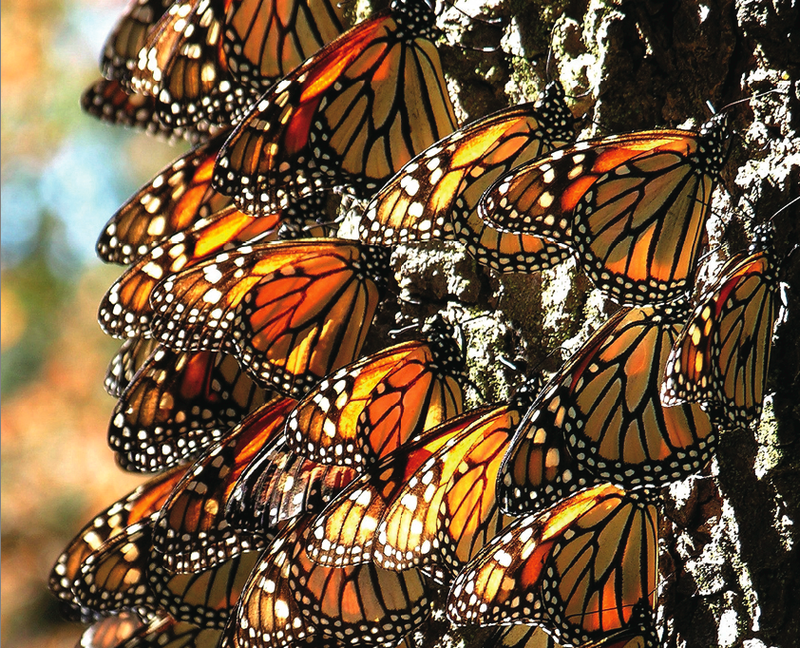 mxc-blog-monarch-g