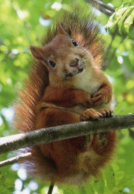ecureuil 123