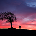 Tree Andrew Watson