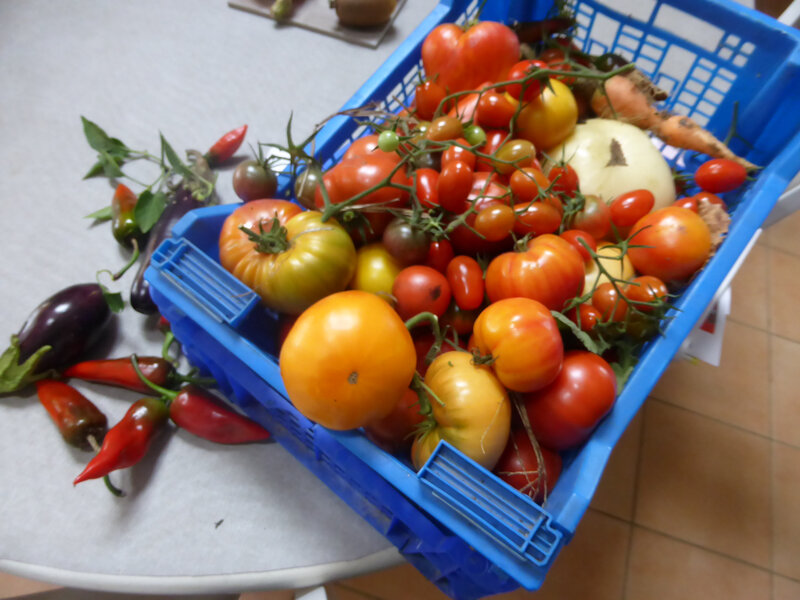 6-tomates, serre, serre tunnel (6)