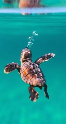 tortue_12