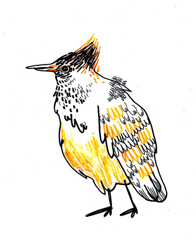 oiseaux_0011