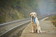chien-sur-la-plate-forme-ferroviaire-
