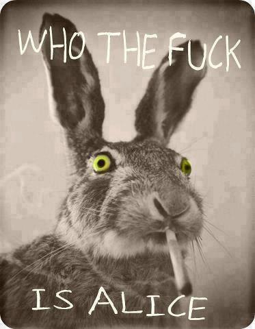 White Rabbit 1