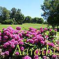 Hortensia gardens @ ploërmel, bretagne.