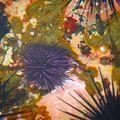 coraux marine Vincendo 3