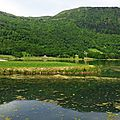 Lac Genos 09061643