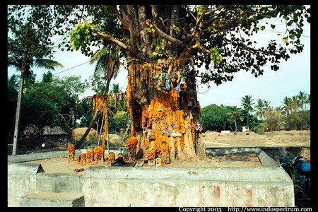 arbre_tamil_naduemple_threads