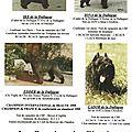 avant internet,florilège de certains boubous nés à l'élevage de la DULLAGUE!!!!
