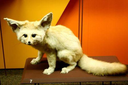 30 juillet Genève Muséum d'histoire naturelle (7)