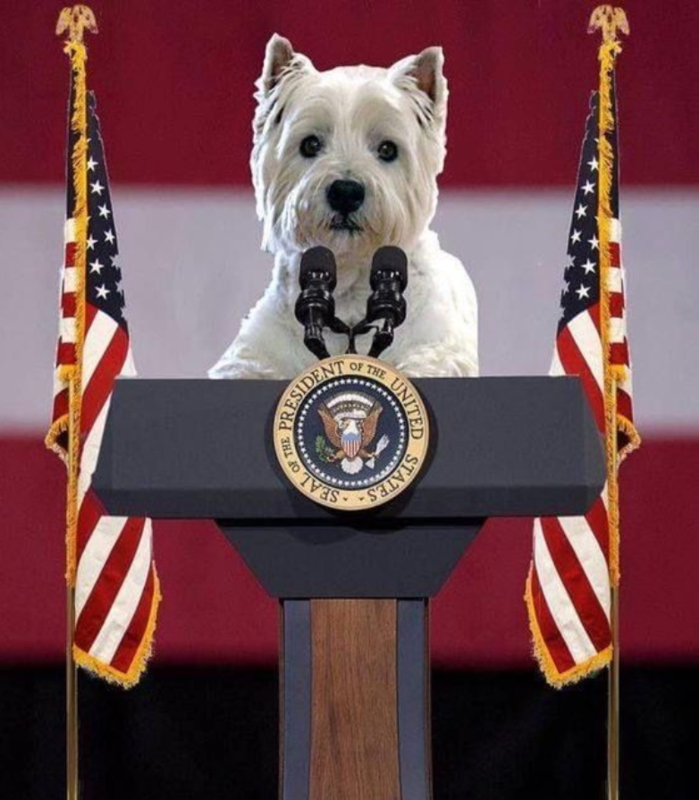 westie election USA
