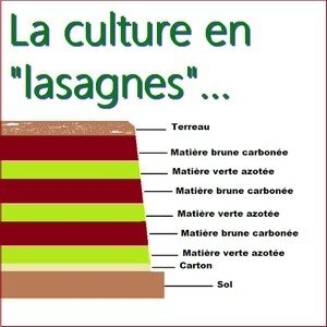 Culture en lasagnes