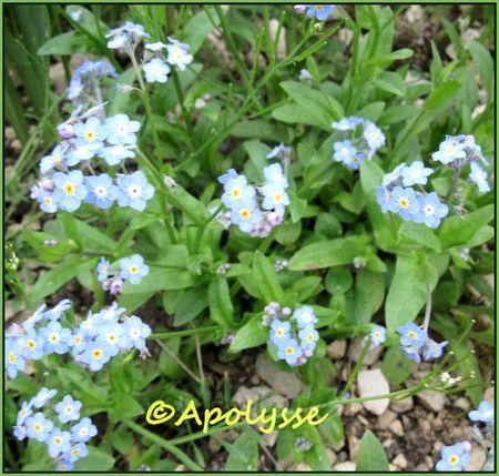 fleurs avril pour Greenye 3
