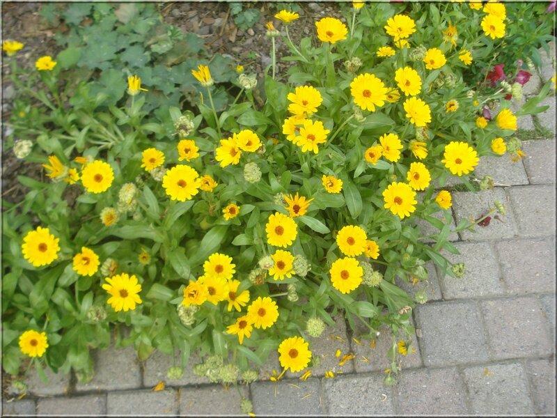 Encore de jolies fleurs...rendez vous chez Nelly