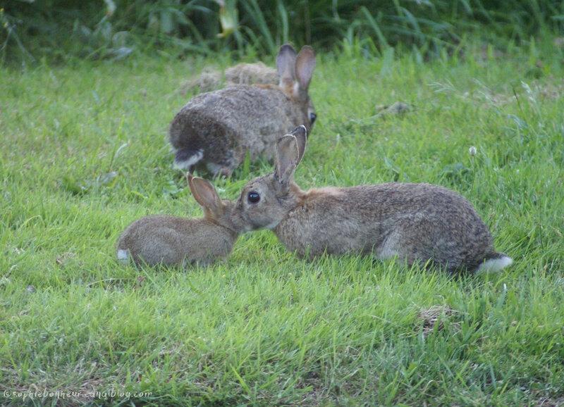 lapins câlins