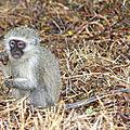 J4 afrique du sud: safari dans le parc kruger 2