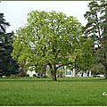 ♥ des arbres majestueux ♥