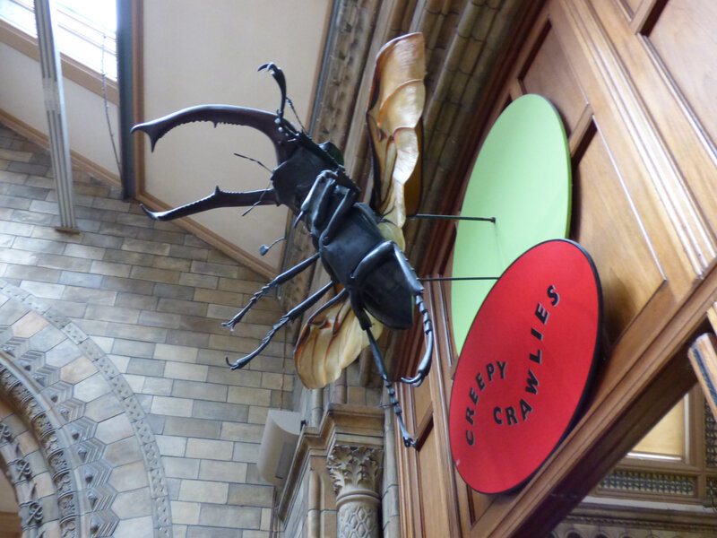 25 Londres Natural History Museum (21)