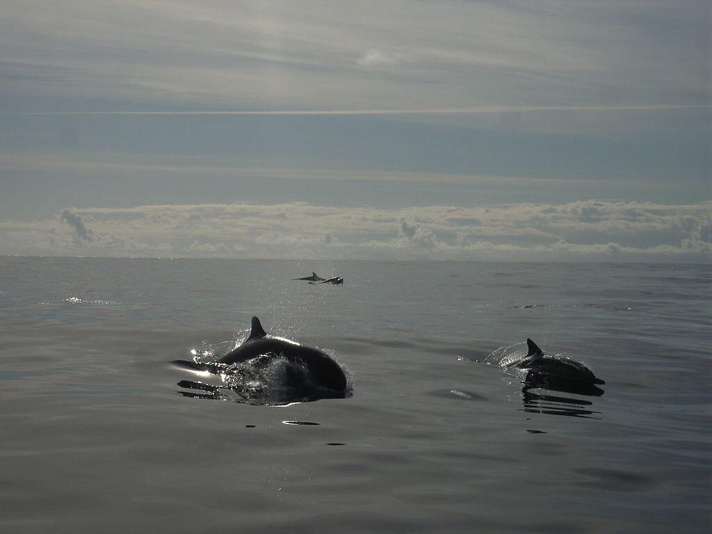 L'adaptation au milieu aquatique