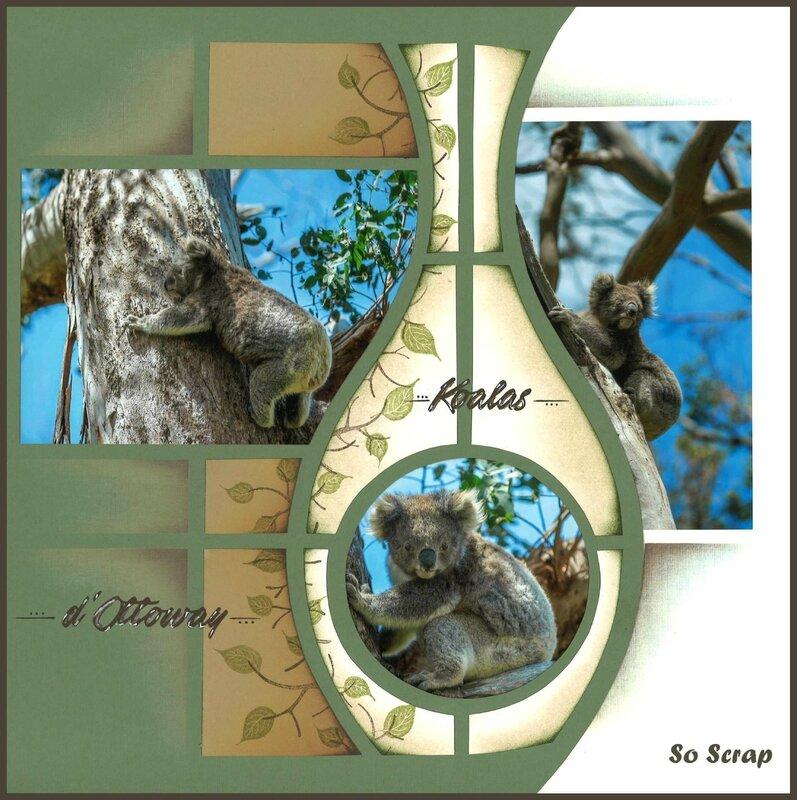Koalas_01