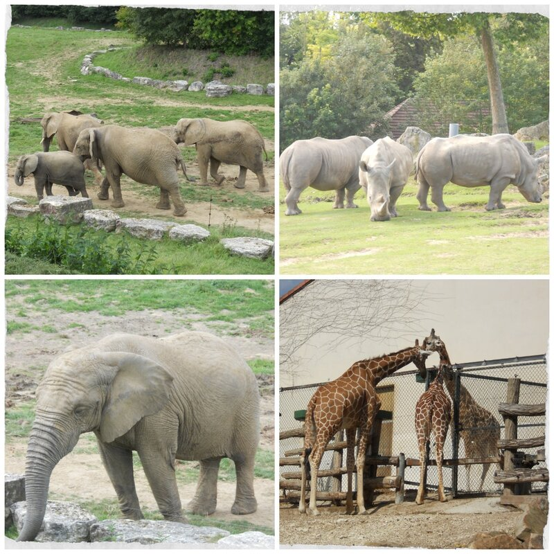 Elephants & Compagnie Zoo de Beauval