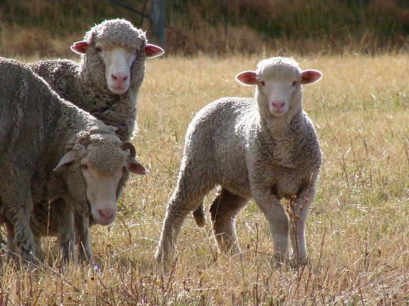 16fev, 3- Twizel, balade des moutons morts (10)
