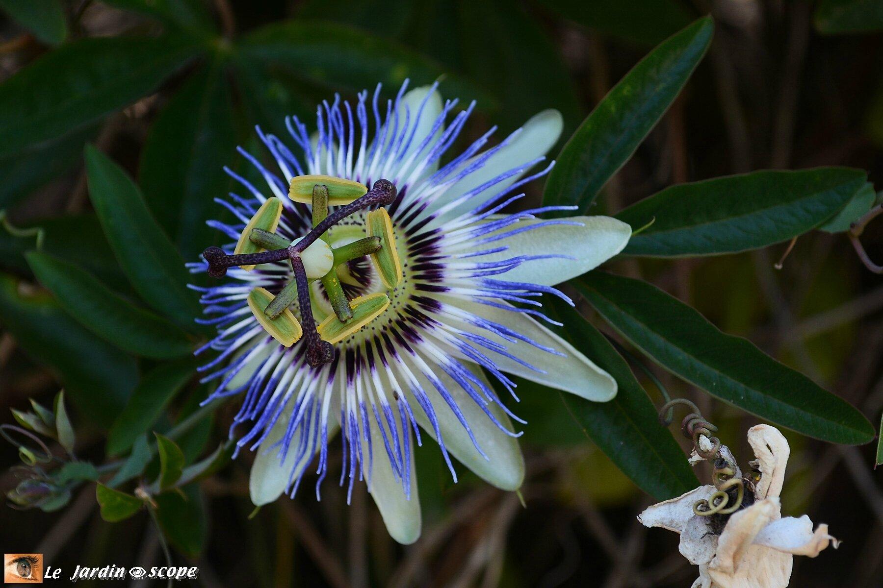 Ces fleurs spectaculaires éveillent la passion !