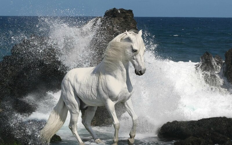photo cheval et mer