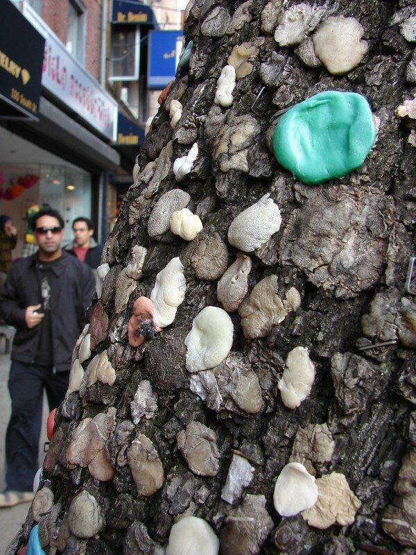 arbre a chewing gum