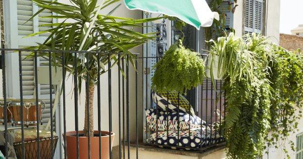 plantes-grimpantes-balcon