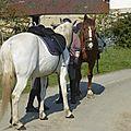 balade à cheval médiévale - Abbaye de Hambye (5)