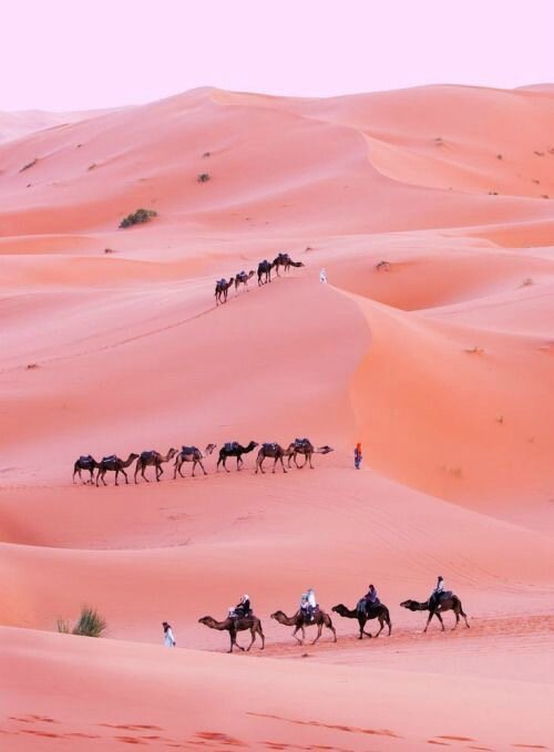 animals-beautiful-camel-desert-Favim