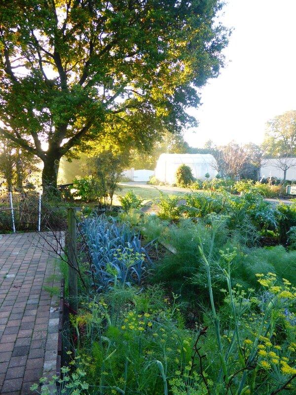 27-vue jardin (3)