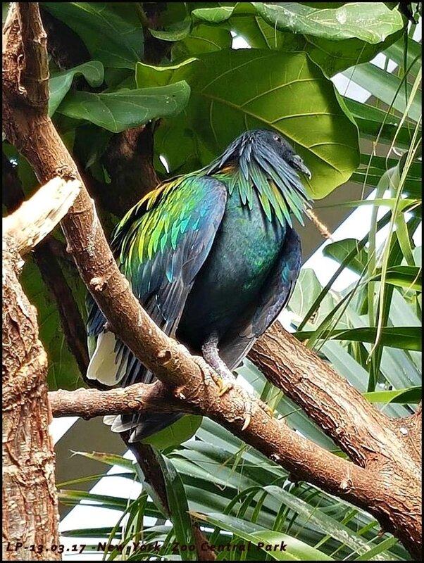 30-NY-Central Park Zoo-13