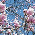 Impressions du mois de mars