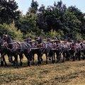 Exceptionnel attelage à 13 chevaux frisons