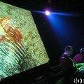 Empreintes Digitales Squids [live]