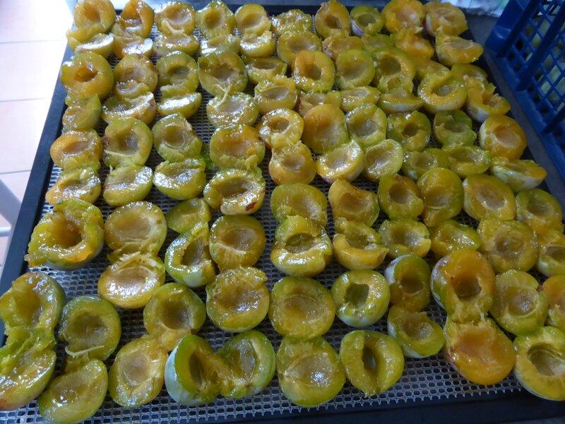 16-prunes séchées (6)