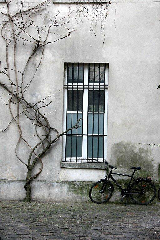 vélo, cour, arbre_4983