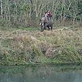 Le parc national de chitwan.