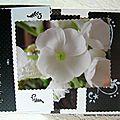 05-album blanc et noir 005