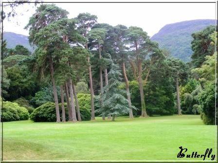 Killarney_arbres