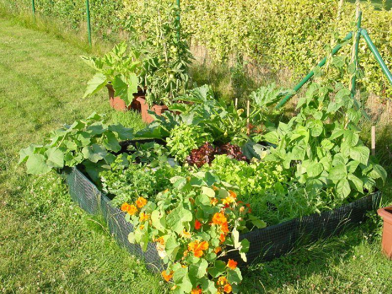 le principe du potager en carr s le jardin d 39 une. Black Bedroom Furniture Sets. Home Design Ideas