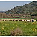 Le temps des troupeaux ...