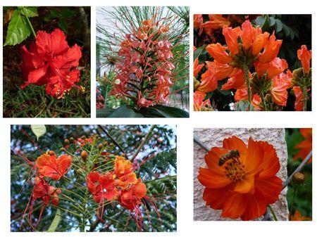 fleurs oranges Brésil