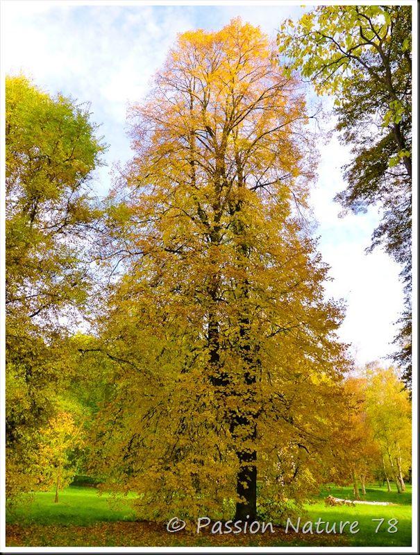 Arboretum de Chèvreloup (10)
